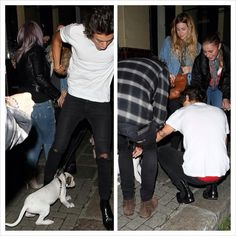 Harry almost tripped over a dog, and then went to see if it was alright!