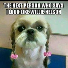 177f87b4591b9c Willie Nelson Funny Animal Memes, Animal Funnies, Funny Animal Photos,  Funny Dog Memes