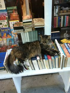 A very well read cat (in front of a used book store)