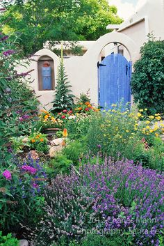 A Santa Fe garden vignette features lavender, buddleia, poppies and other colorful and drought tolerant plants.