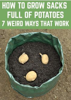 How To Grow Sacks Full Of Potatoes - 7 Weird Ways That Really Work - Home vegetable garden Grow Potatoes In Container, Container Gardening Vegetables, Planting Potatoes, Vegetables Garden, Herbs Garden, Garden Types, Container Plants, Potato Growing Containers, How To Plant Potatoes