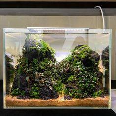 10 Tips on Designing a Freshwater Nature Aquarium Aquarium Landscape, Nature Aquarium, Planted Aquarium, Nano Aquarium, Aquarium Design, Aquarium Fish, Aquarium Aquascape, Water Plants, Water Garden