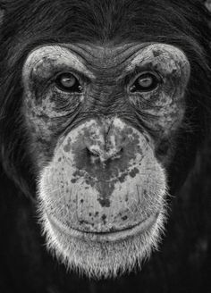 Chimp this..........