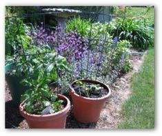 Starting a Potted Vegetable Garden, Gardening in Pots, Container Garden Ideas