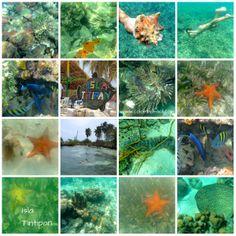 Snorkeling / Careteo Colombia Islas de San Bernardo