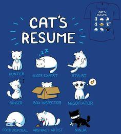 Currículo felino!