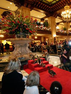 The Peabody Hotel Ducks  -  See them everyday at 11am & 5pm. So cute, they live on the roof. Every day the red carpet is rolled out and the ducks come down single file in the elevator and swim in the fountain in the middle of the lobby.