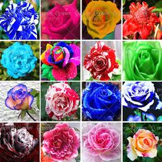 16 varieties of roses mixed seed,100PC rare bonsai rainbow flower seeds, full color plant, A group of potted rose seeds #Affiliate