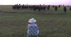"Farmer Derek Klingenberg serenades his cattle by playing Lorde's ""Royals"" on the trombone."