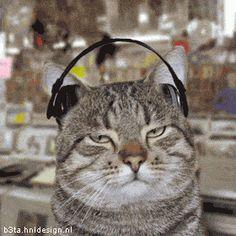 cat-phone.gif (280×280)