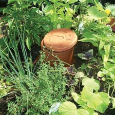Olla - An Ancient Water-Conserving System – FARMcurious