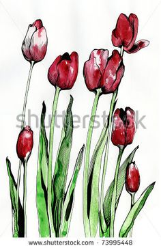 stock photo : The illustration - drawn with ink, watercolor and pen tulips flower as an imitation of an engraving and an element of flora