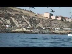 Kalifornien: Kajaker von Wal überrascht
