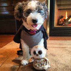 Clever Ideas for Dog Halloween Costumes - Fidose of Reality Girl Dog Costumes, Pet Halloween Costumes, Pet Costumes, Dog Halloween, Happy Halloween, Harry Potter Dog Costume, Pet Fashion, Girl And Dog, Dog Sweaters