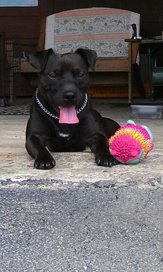 My Patterdale Terrier Vette. I love him so much! Such a good dog!