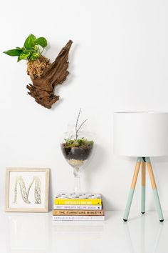 Image result for how to hang ferns on driftwood