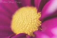 Fine Art Macro Photography Magenta and Yellow Flower  by OakleaCottageDesigns, $10.00