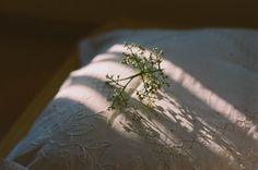 Good morning III | Flickr - Photo Sharing!