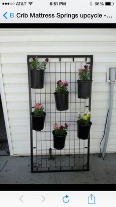 Great way to let tomato vines climb and, create  great back drop