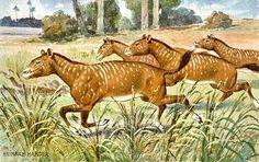 Fotos de 11 animales extintos « Ahuramazdah