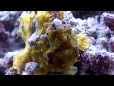 Below Pom Pom Island 2015: Ep. 05