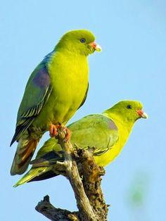 Most Beautiful Birds, Pretty Birds, Beautiful Butterflies, Love Birds, Animals Beautiful, Animals Of The World, Animals And Pets, Cute Animals, Exotic Birds