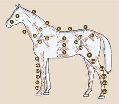 Wellness für Pferde: Die Putzmassage