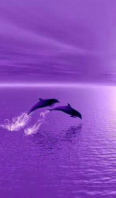 I 💜 U, cos you're PURPLE. Dolphins surfing in purple sunset! Purple Sunset, Purple Love, All Things Purple, Shades Of Purple, Pink Purple, Light Purple, Dark Purple Aesthetic, Violet Aesthetic, Purple Aesthetic Background