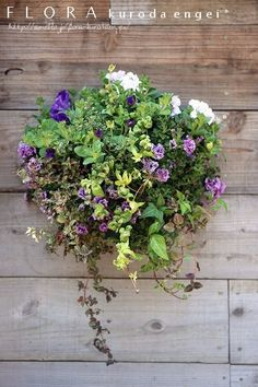 八重咲きペチュニア・壁掛けハンギング フローラのガーデニング・園芸作業日記