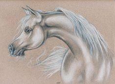 Arabian Horse by Evey Studios