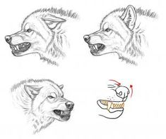 how to draw an angry wolf step 2