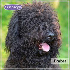 Barbet #Dog #LargeDogBreed #Raza #Grande #Perro #Canino #EasyGroom #Animal