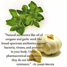 Garlic and oregano oil. Hell yes. First sign of sickness = drop of oregano oil under the tongue and chomping down on a clove of garlic. Natural Medicine, Herbal Medicine, Holistic Medicine, Natural Cures, Natural Healing, Holistic Healing, Natural Treatments, Holistic Care, Holistic Wellness