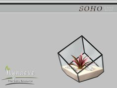 NynaeveDesign's Agave Plant Terrarium