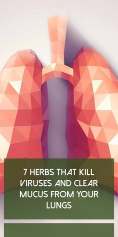 7 Herbs That Kill Viruses and Clear Mucus from Your Lungs – Health Awareness Media Viral Infection, Bacterial Infection, Beauty Tips For Hair, Health And Beauty Tips, Beauty Ideas, Decongestant, Oregano Oil, Eucalyptus Essential Oil, Essential Oils