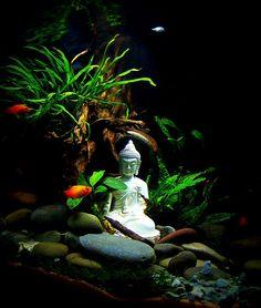 Zoom in (real dimensions: 868 x Tropical Fish Aquarium, Betta Fish Tank, Aquarium Fish Tank, Planted Aquarium, Mini Aquarium, Aquascaping, Aquarium Design, Aquarium Setup, Fish Tank Themes