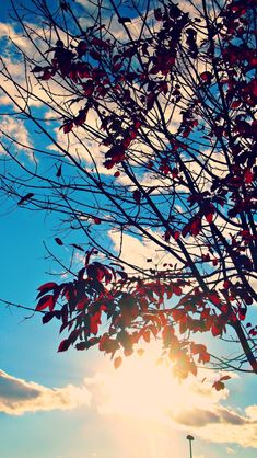 fall skies