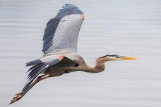 In Flight Photo by Karen Jacobs Cook — National Geographic Your Shot