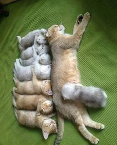 8 babies, in ONE litter!