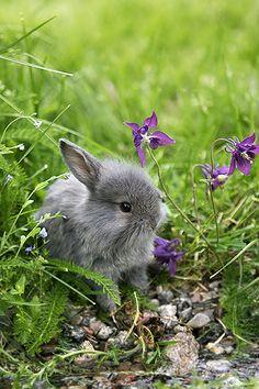 Pretty rabbit in the grass.