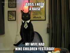 33 Funny Cat Memes That Never Fail to Make Us LOL - Cheezburger