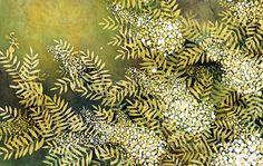 バティック ナナカマド 葉と白い花[02237007326]| 写真素材・ストックフォト・イラスト素材|アマナイメージズ