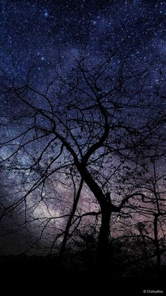Night Tree Milky Way Photography Free Ultra HD Mobile Wallpaper Apple Logo Wallpaper Iphone, Owl Wallpaper, Mobile Wallpaper, Milky Way Photography, Tree Photography, Photography Wallpapers, Higher Ground, Night Owl, Stargazing