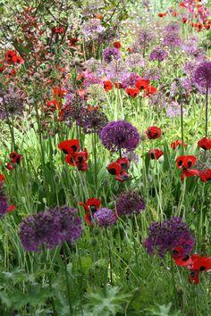 Ladybirds & Allium. Great Dixter