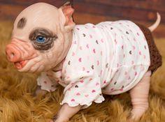 Reborn Awake Pig/Piglets