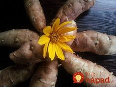 We're growing sunchokes, AKA Jerusalem artichokes, for the food and medicinal value of this versatile plant. The sun choke is beneficial for blood sugar, gut health and more. Growing Jerusalem Artichoke, Grapefruit Seed Extract, Medicinal Plants, Weed, Diabetes, Pumpkin, Common Names, Artichokes, Dandelions