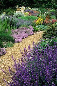 Garden with Lavender