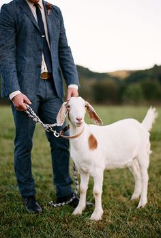 Brides.com: . Some pets don't need special adornment to have a meaningful role in your big day. Case in point: this sweet goat posed with the groom for a formal portrait.
