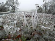 """Eiszeit - Was es mit der """"kleinen Eiszeit"""" in Teilen Österreichs auf sich hat - vor allem das Waldviertel, aber auch andere Teile Niederösterreichs und des Burgenlands sind betroffen - darüber klärt euch der aktuelle Blogbeitrag des NP Thayatals auf: http://blog.np-thayatal.at/eiszeit/"""