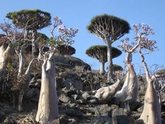 Socotra is a small Yemeni archipelago of four islands and islets in the Indian Ocean off the coast of the Horn of Africa, about 350 kilometers south of the Arabian peninsula.